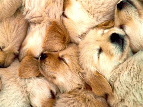 puppy pile pile things