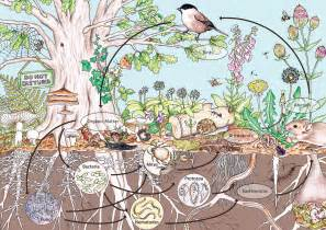 Backyard Bill Permaculture Design Principle 10 Use And Value Diversity