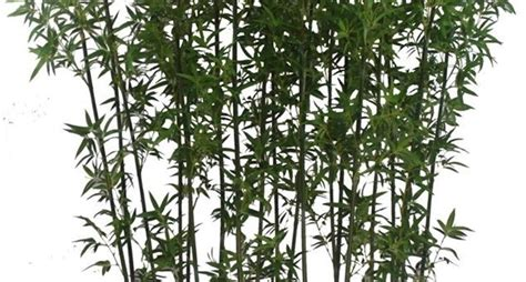 piante finte da giardino piante finte da esterno piante finte piante da esterno