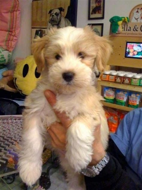 medium sized apartment dogs best 25 small breeds ideas on small dogs cutest small breeds and