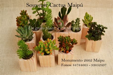 souvenirs cactus maipu recuerdos de matrimonio en ceramica blanca souvenirs cactus maip 250 marzo 2014