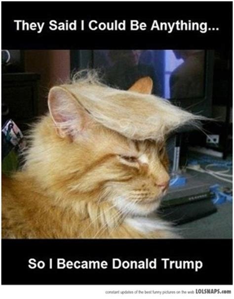 They Said I Could Be Anything Meme - donald trump cat best they said i could be anything memes