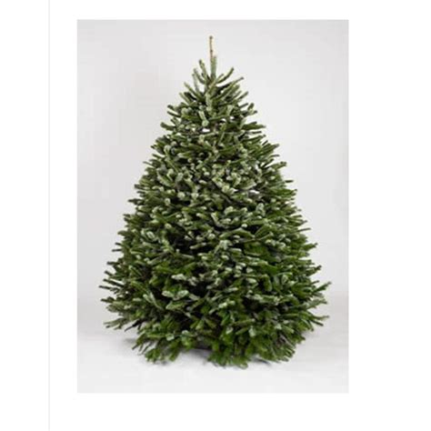 3ft real tree at lowes shop 6 7 ft nordmann fir real tree at lowes