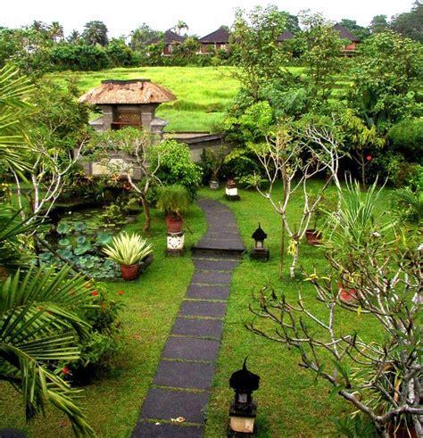 Tanaman Jahe Wulung macam macam tanaman hortikultura bibitbunga