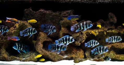 aquarium design group aquascape aquarium design group an aquascape for frontosa