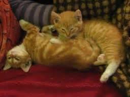 2 kittens in huis veestapel