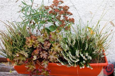 piante da davanzale giardino e terrazzo le composizioni invernali casa e trend