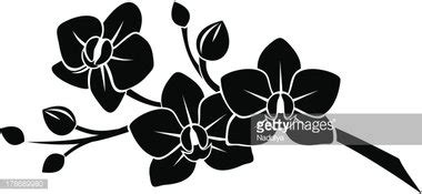 black silhouette of orchid vector stock vectors clipart me