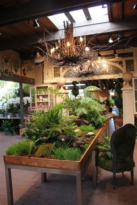 17 best images about jungle indoor plants trees