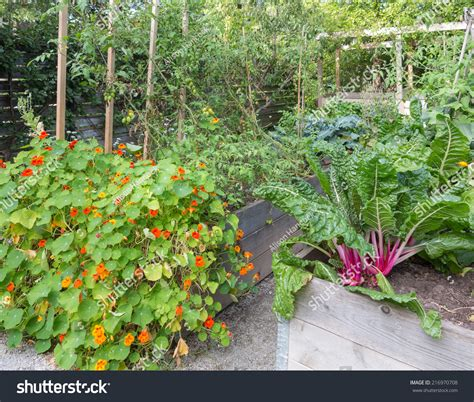 best vegetables to grow in raised beds best vegetables to grow in raised beds best vegetables to