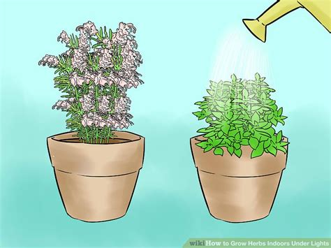 growing plants indoors without artificial light indoor herb garden artificial light garden inspiration
