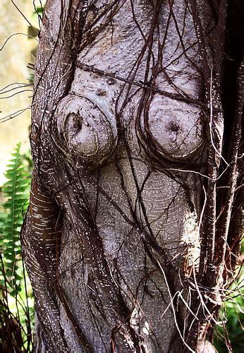 imagenes mas raras de la naturaleza el mundo y sus cosas raras taringa