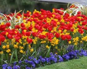 popular spring flowers spring flowers top flowers wallpaper