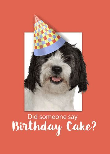 A Cute Dog Is Wearing A Birthday Hat. Free Happy Birthday
