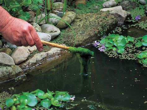 How To Remove Green Algae From Patio by How To Remove Blanket From A Pond Pond Aquarium