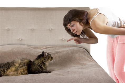 cat peeing in bed 10 things your cat wishes you knew iheartcats com