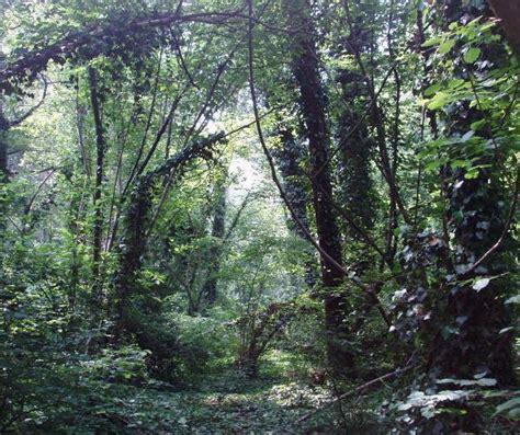 lipu pavia bosco siro negri oasi lipu