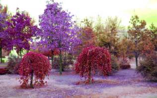 colorful trees colorful nature colorful nature wallpaper garden idea