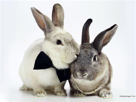 like a bunny muthu rockzz rabbits chooo sweet i like rabbit