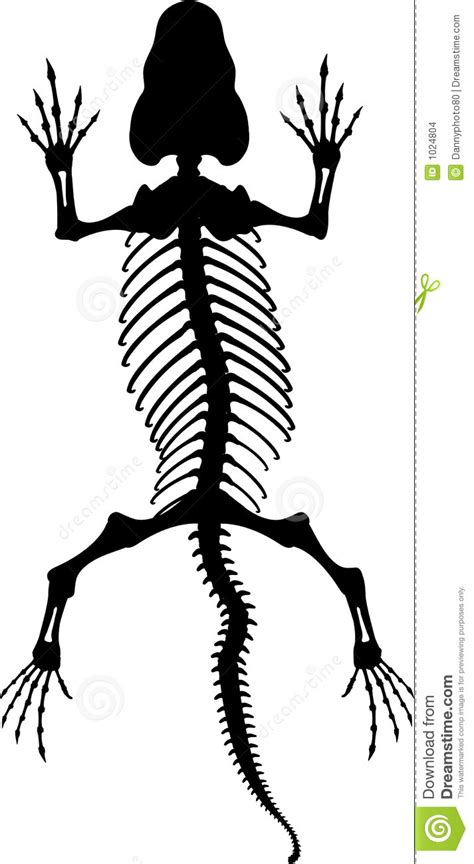 lizard skeleton 2 stock images image 1024804