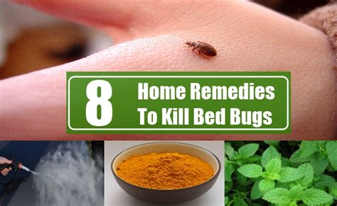 Bed Bug Home Remedy 8 home remedies to kill bed bugs search home remedy