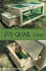 raising backyard quail triyae backyard quail production various design