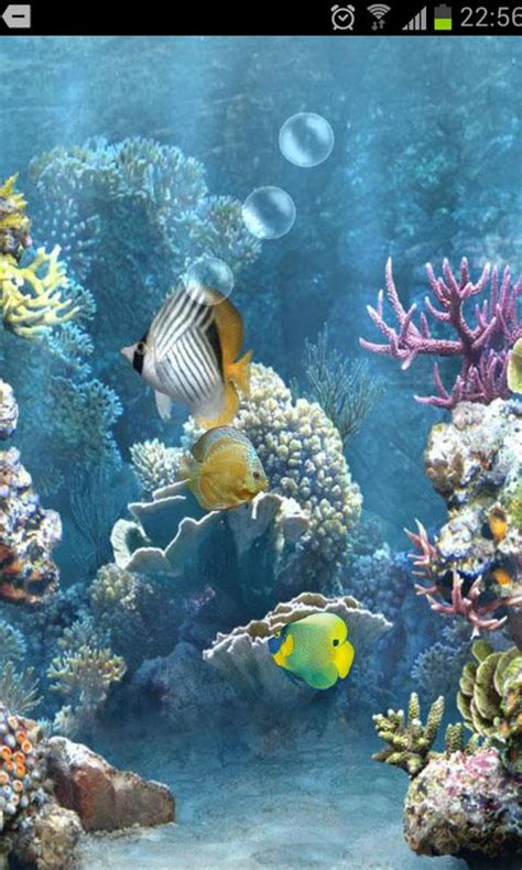3d live fish wallpaper for pc download fish tank 3d live wallpaper for android fish