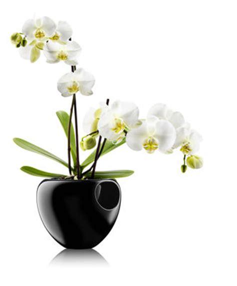 vasi con riserva d acqua scopri vaso con riserva per orchidee con serbatoio d