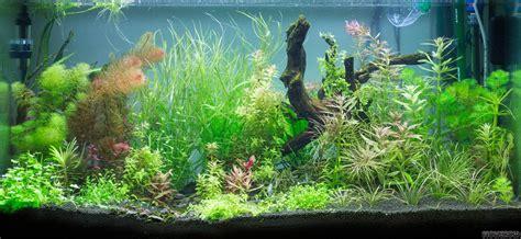 aquascape bubble light aquascape bubble light guppy guide creating depth in an