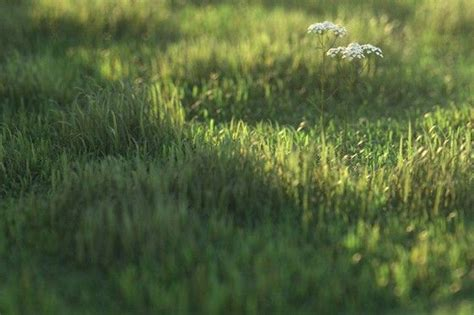 zbrush grass tutorial vray info tutorial creating realistic grass with