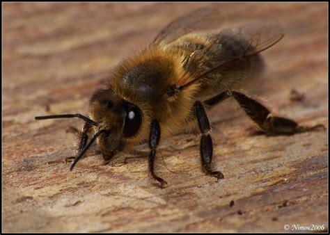 Imágenes De Animales Insectívoros | canalred gt fotografias de insectos imagenes de insectos