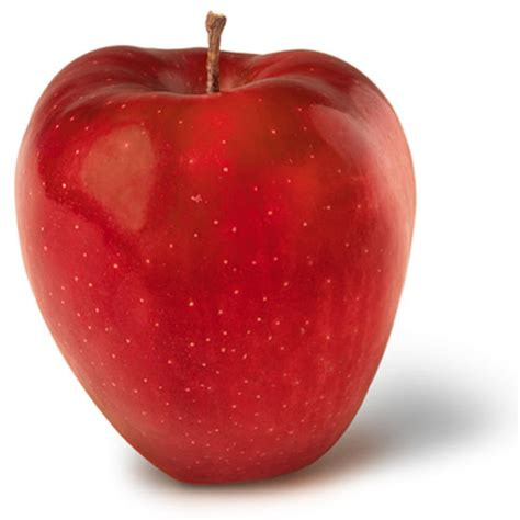 apple york apple varieties of new york state red delicious ny