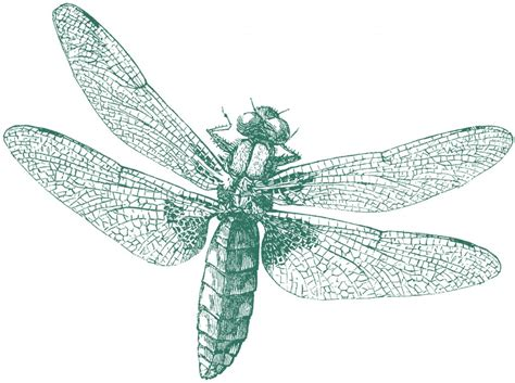 royalty  images dragonfly  graphics fairy