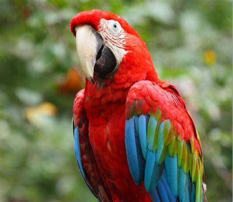 imagenes guacamayas verdes guacamaya ala verde buscar con google aves hermosas