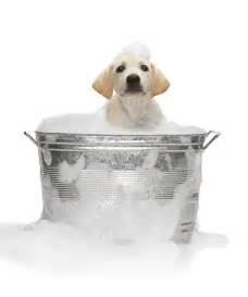 how to bathe puppy wash pets pet health cats dogs rabbits and everything