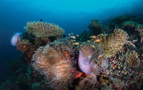 bureau 騁ude m馗anique hvalhajer og snorkeleventyr p 229 maldiverne l jysk rejsebureau