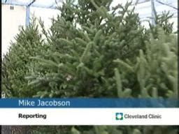 christmas trees can trigger allergy symptoms cleveland com