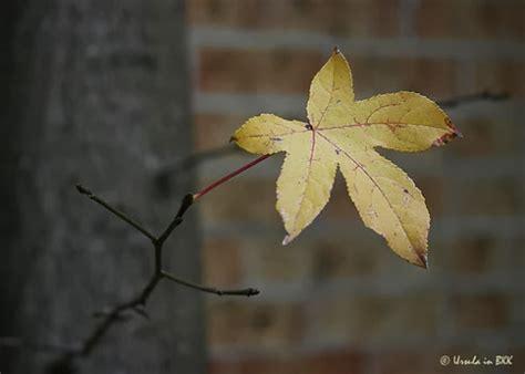 themes of the story last leaf the last leaf brief summary kuliahku