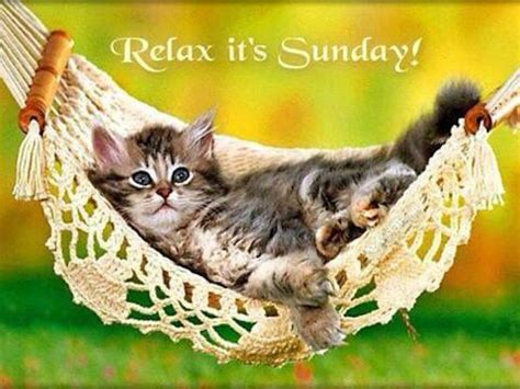 A Cat On A Sunday by Relax Its Sunday Relax Kitten Sunday Sunday Quotes Happy