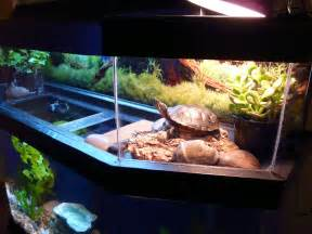 turtle tank squirt diy and crafts for around the house pint
