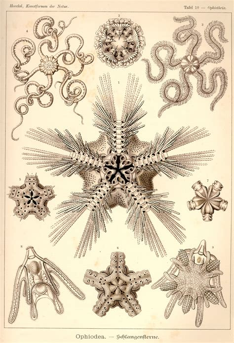 art forms in the ernst haeckel art forms in nature 1899 1904 a selection