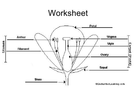 plant reproduction worksheet chapter 16 reproduction in plants lesson 1 types of reproduction in pin 4 school work