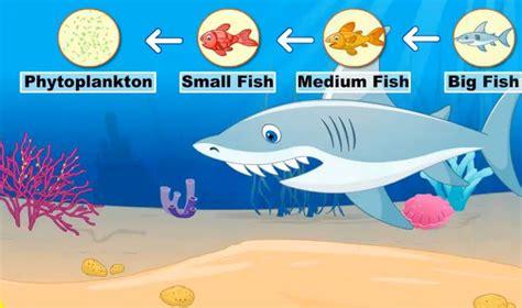 cadenas alimenticias en ingles la cadena alimenticia food chain http www turtlediary