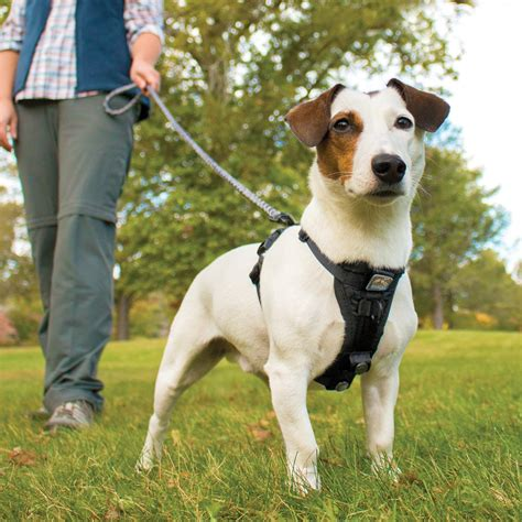 puppy leashes the best leashes and harnesses for dogs that pull the right leash can make all the