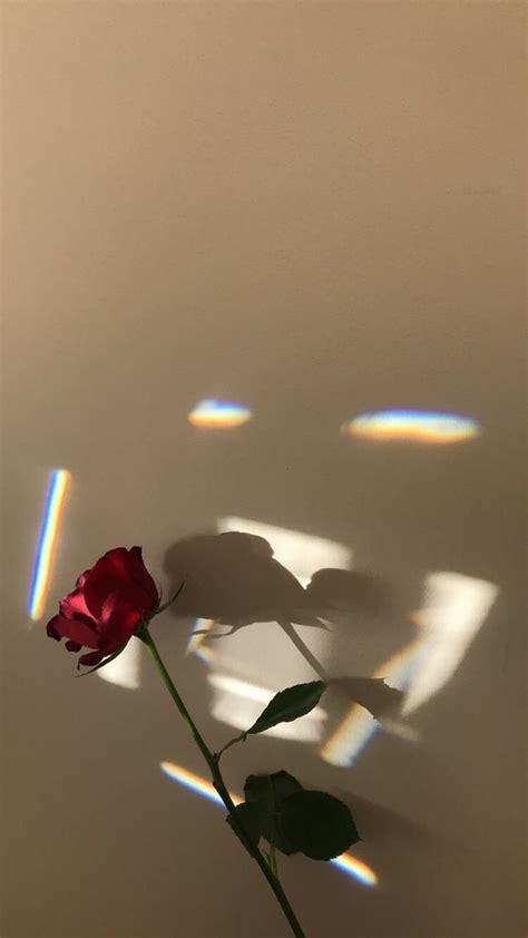 wallpaper rose flowers phone simple aesthetic