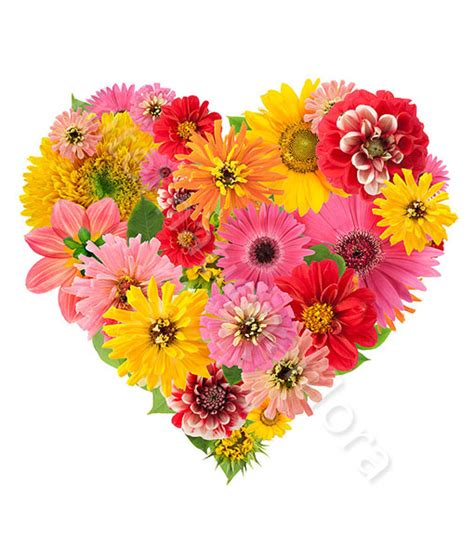 gerbere fiori cuore di gerbere e fiori colorati