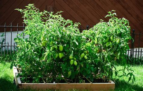 Square Foot Gardening Tomatoes by 5 Simple Ways To Get Your Garden Going