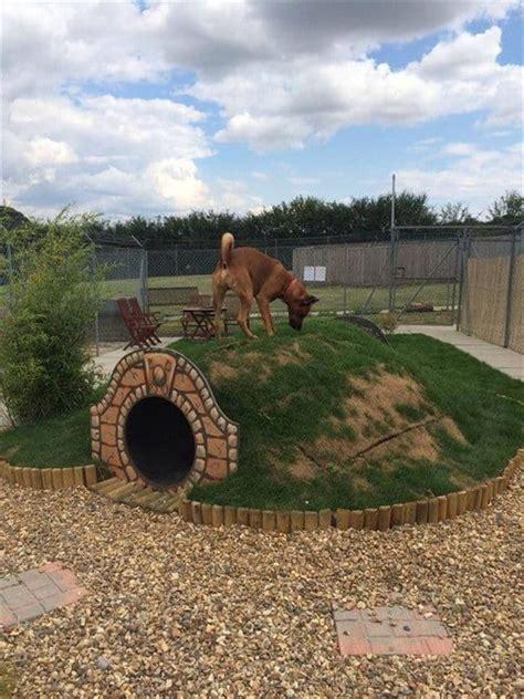 diy dog houses  amazing youll   lived