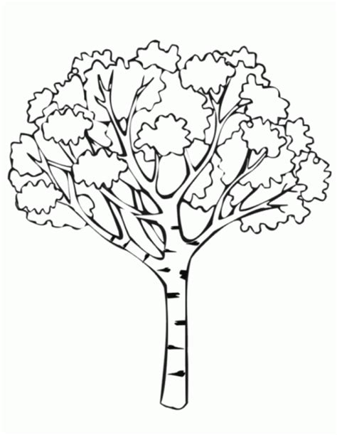 free coloring pages of rain forest layers