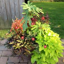 sun container garden ideas photograph container garde